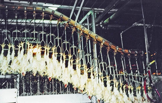 """It's estimated that millions of chickens a year in the US are ultimately killed in the slaughterhouse by this last step, being boiled alive.""   Part of the footage from Food, Inc. was of chickens being hoisted by their feet via these hooks, and that's what inspired the ""hook system"" on the killing floor of Gochan One."