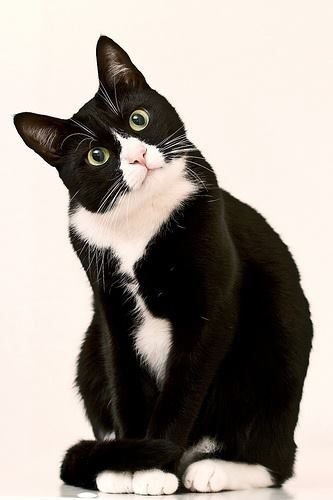 """Tuxedo Cat says, """"Meow""""..this likes my Bones the cat...so loveable...He was a wild cat when he adopted me.(had no owners.. abandon)"""