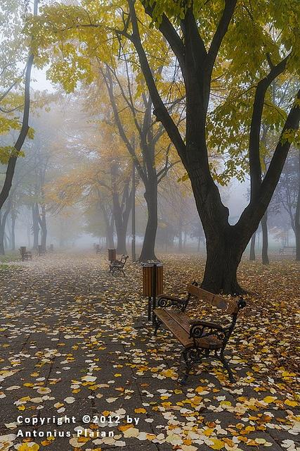 Timisoara - Autumnal by Antonius Plaian, via Flickr