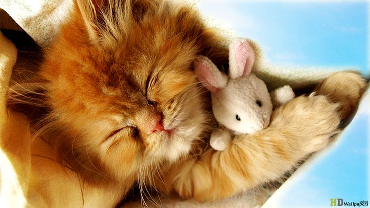cute white baby kittens sleeping Google Search Kittens