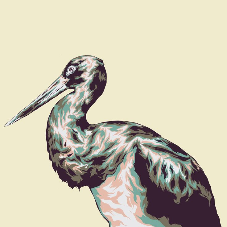 Zoo Bird illustration