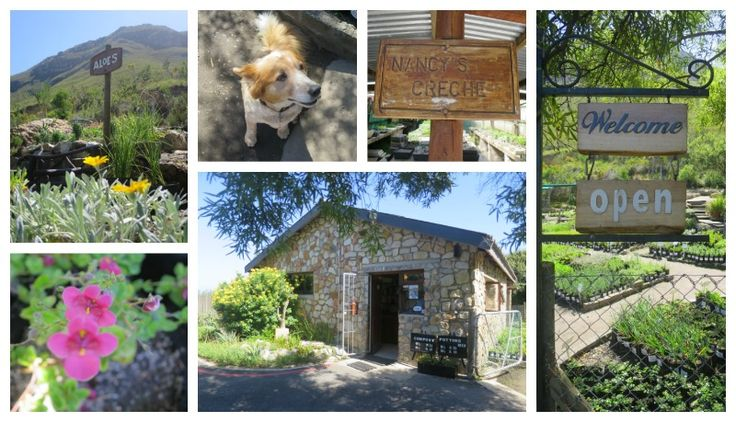 Non profit organisation Fernkloof Indigenous Nursery suppliers of indigenous and water wise plants:  http://ilovehermanus.co.za/…/her…/listing/fernkloof-nursery/