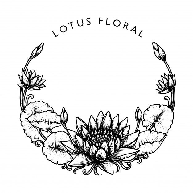 Round Lotus Floral Lotus Flower Drawing Lotus Lotus Illustration