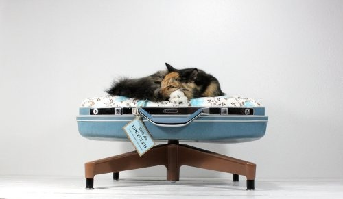 Reuse of old suitcases - pet lounge