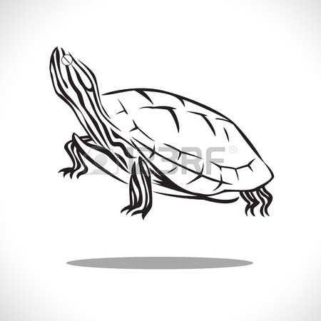 tatuaggio tartaruga: immagine stile grafico di tartaruga isolato su sfondo bianco