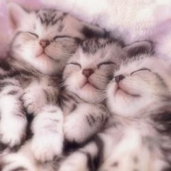 3 little kittens...still have their mittens...pretty ones too: Snuggles, Sleep Beautiful, Pet, Kittens, Crazy Cat Lady, Sleep Baby, Kitty, Sweet Dreams, Animal