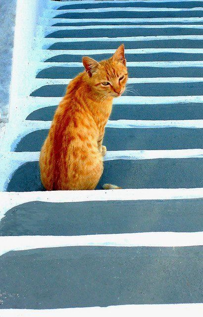 Cat on stairs.. Pyrgos ~ Santorini Island, Greece | Flickr - Photo by Marite2007