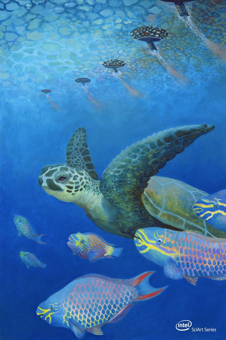 Tartaruga Marina: International Science, Accessible Posters, Student Projects, Science Projects, Illustrations, Intel Sciart, Isef S Student, Ocean, Oil