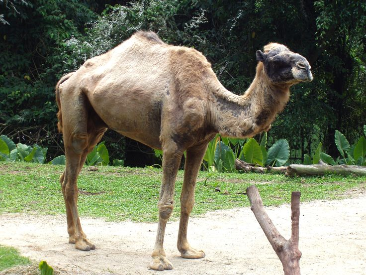 Is the Bible Wrong About Camels? | Sermon on the Mount Publishing