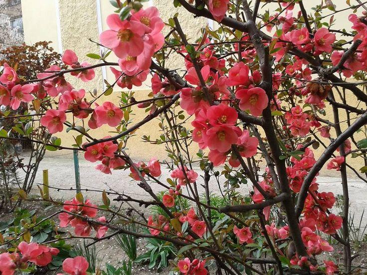 Spring in Arad, Romania