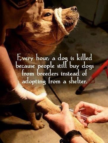 #animals #rescue #shelter #pets #dogs #puppies #cats #kittens #save #adopt #homes #family #foster #love #share