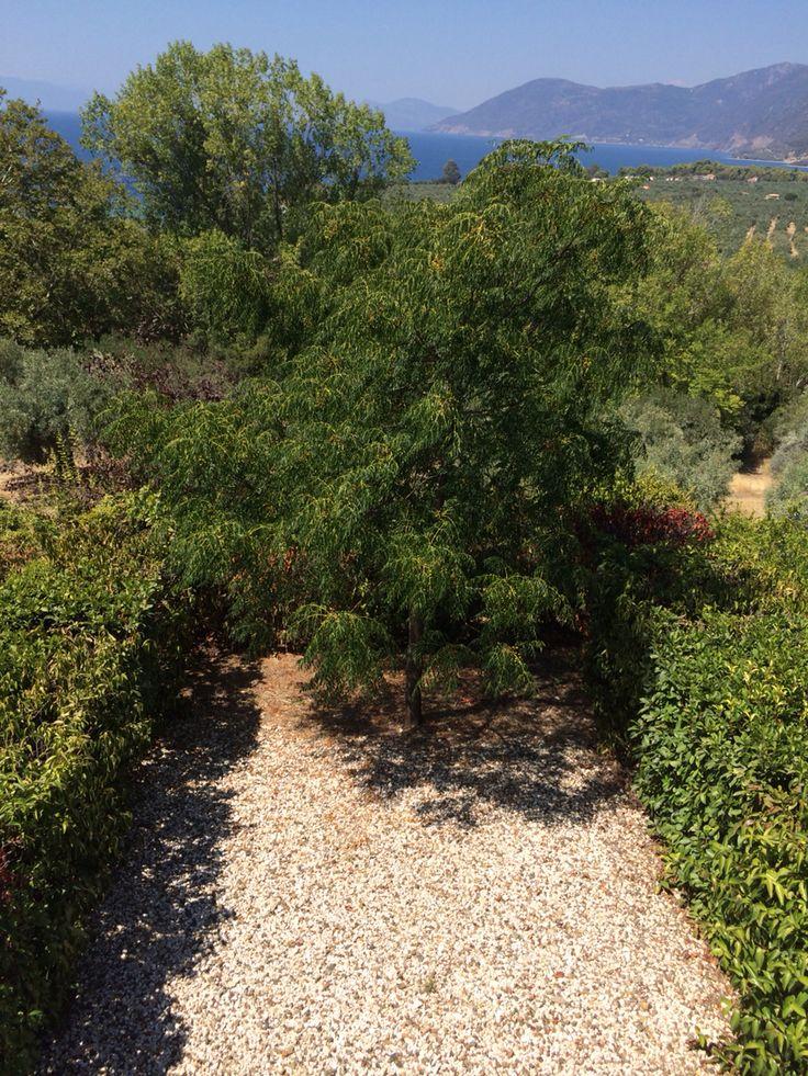 "The garden of ""Daphne"" room!   #eleonashotel #garden #nature #agrotourism"