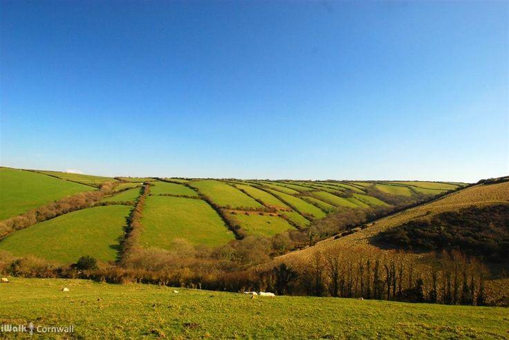 Countryside views at Pengold near Crackington Haven, Cornwall