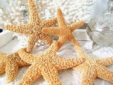 Sugar Starfish by Something Beachy Store tropical-accessories-and-decor