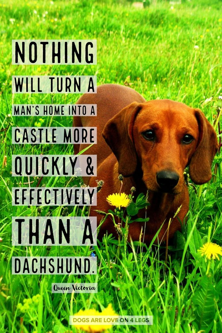 Dog Quote Nothing Will Turn A Man S Home In To A Castle Dog
