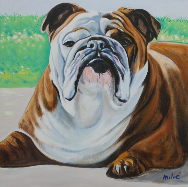 Zeus 24x24 Quot Oil On Canvas By Drago Milic Dog Art Cute