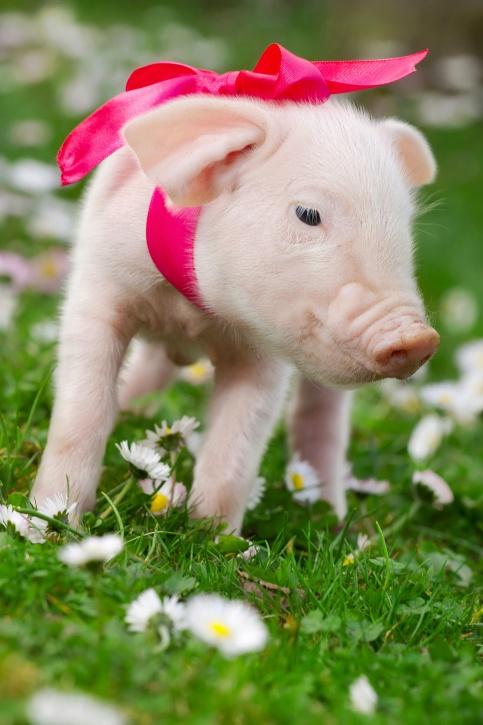231 Best ㋡ 211 Inc 211 Inc ㋡ Images On Pinterest Piglets Cute