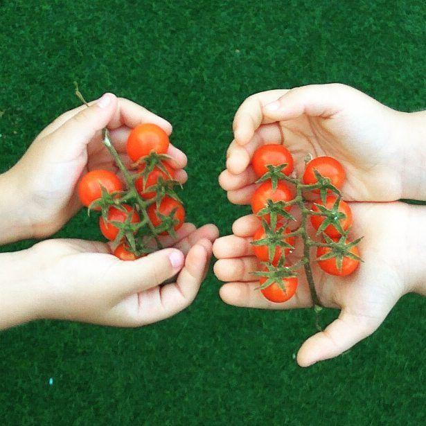 Buenos días Famili@! Recordáis mi huerto urbano? Estos son los tomates cherry que hemos recolectado! Super contentos con este esperimento!  #francescocina #branding #bevange #foodie #factory #marketing #restaurant #socialmedia #pornofood #foodporn #vscofood #instafood #foodlove #foodporn #love #huerto #criando #elsa #hugo #mellizos #twins #foodie #garden @jysk #jysk #buenosdias #buongiorno #goodmorning #happy #sipuedessoñarlopuedeshacerlo #sonrieesgratis #felizsabado #huertourbano…