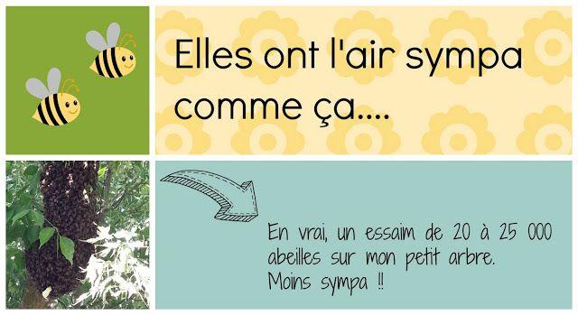 Paris à l'Ouest: SOS essaim d'abeille dans mon jardin