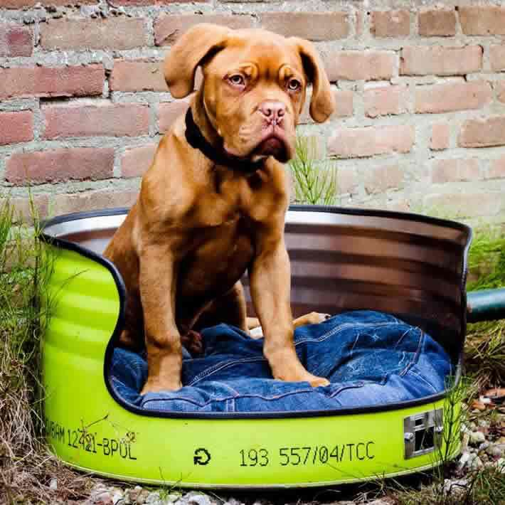 Oil drum dogbed! Great stuff