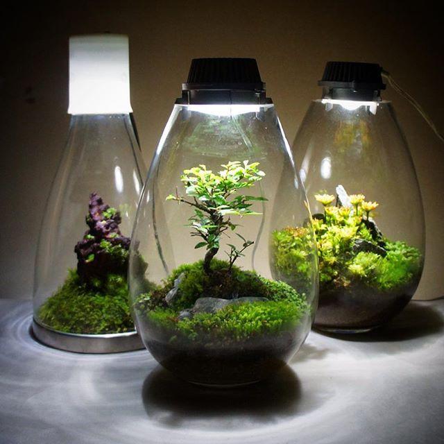 400 Best Images About Terrariums On Pinterest