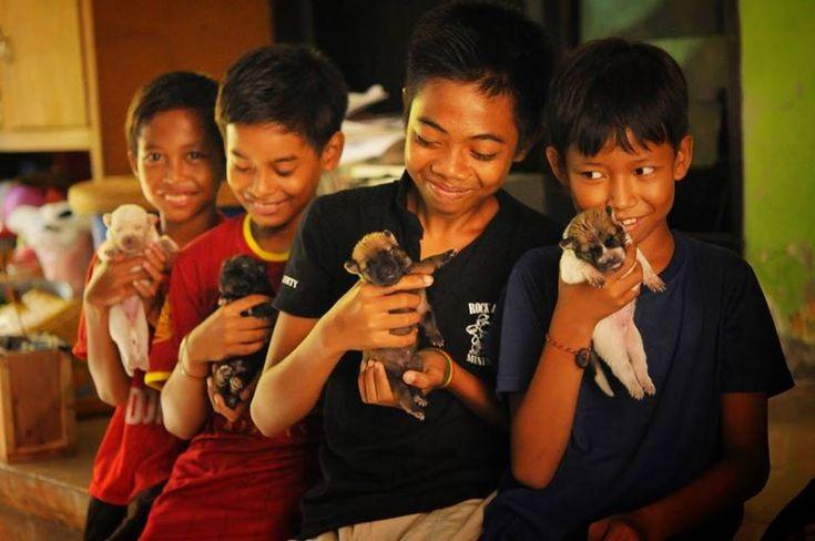 Los perros de Bali: el reto de cambiar el futuro de una raza única y el increíble trabajo de BAWA