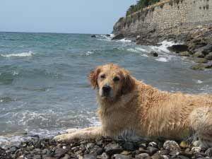 Vakantie appartement in Ligurië met hond