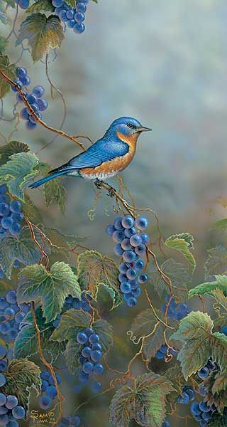 Concord Blue-Bluebird by Sam Timm WildWings