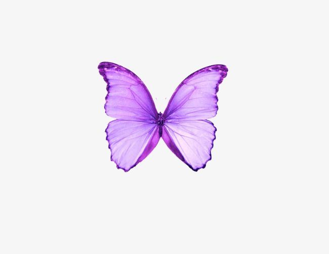 Dream Purple Butterfly Png Clipart Animal Butterfly Butterfly Clipart Butterfly Clipart Dream Free Png Download Butterfly Clip Art Purple Butterfly Png