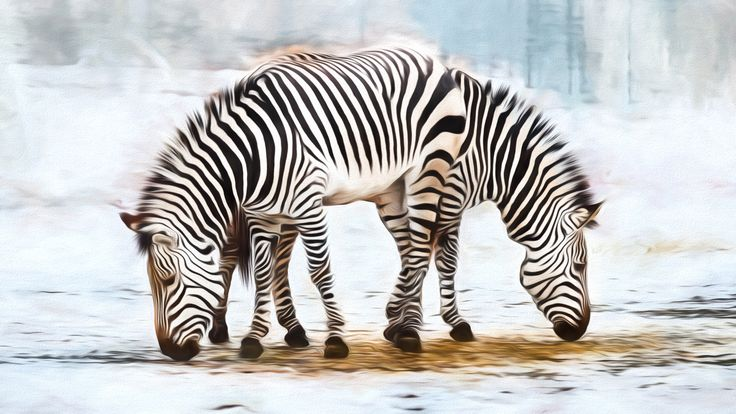zebra dinnertime by Stefan Metzulat on 500px