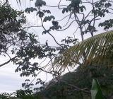 Tucan in tree