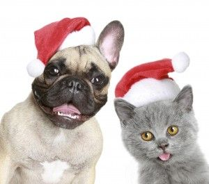 Have a great holiday season but remember to keep your pets safe!  Check out top 10 list of holiday-related decorations, plants and food items that the veterinarians at Pet Poison Helpline recommend keeping away from your pets.