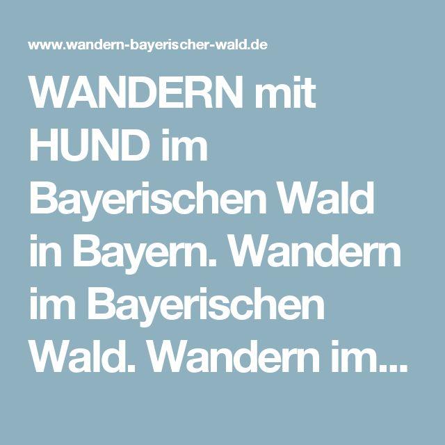 WANDERN mit HUND im Bayerischen Wald in Bayern. Wandern im Bayerischen Wald. Wandern im Viechtacher Land Bayerischer Wald. Wandern in Viechtach Bayerischer Wald