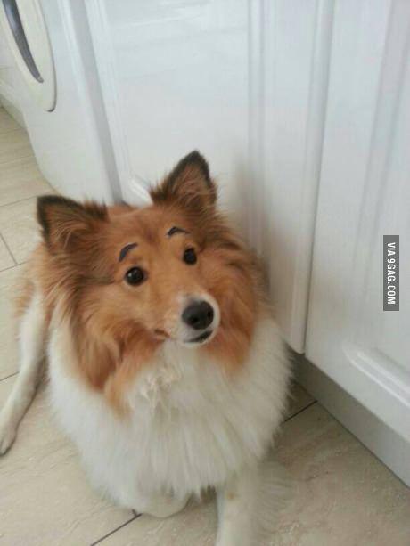 ein Hund mit Augenbrauen. was gibts den nicht im Internet?