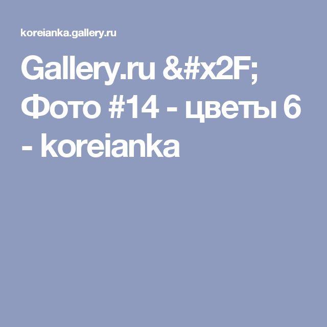 Gallery.ru / Фото #14 - цветы 6 - koreianka