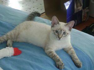 Cat profile for Samuel...