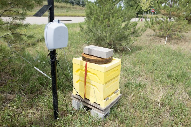 The of Bees Adding Sensors to Monitor Hive