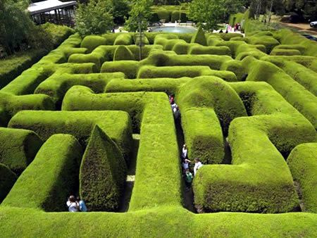 Ashcombe Maze (Australia)- The famous maze at Ashcombe is Australia's oldest maze, and there's plenty to do there along with the challenging maze. Nearby gardens offer a rose maze in addition to the traditional hedge mazes that have evolved over some 30 years of development.
