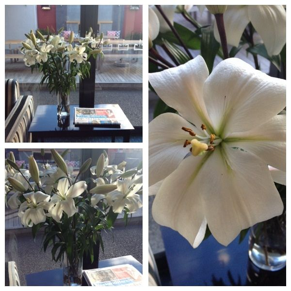 Our beautiful 'Lobby Lillies!' purchased locally from Blokkers Nurseries  http://www.blokkersnurseries.co.nz/