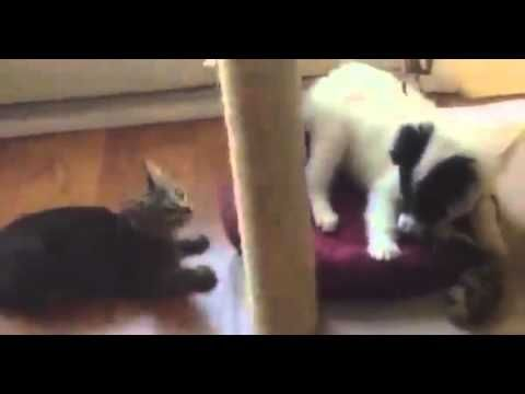 BEST Funny Videos 2014 Funny Cats Video Funny Cat Videos Ever Funny Animals Funny Fails 2014 2 - http://positivelifemagazine.com/best-funny-videos-2014-funny-cats-video-funny-cat-videos-ever-funny-animals-funny-fails-2014-2-2/ http://img.youtube.com/vi/72tgtm2AcoQ/0.jpg  Collectaion Funny animals video that shows a range of hilarious clips of animals doing crazy things,Funny Kids, Funny Animals Compilation. Judy Diet Programme ***Start your own website with USD3.9 per month