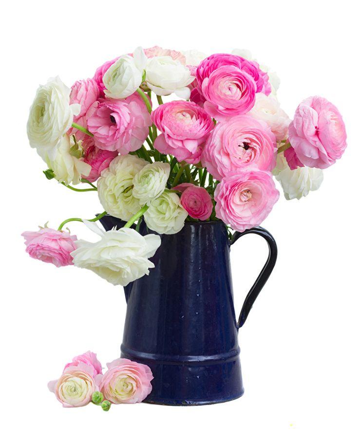 нанять профессионального ваза с цветами на белом фоне фото последние годы этот