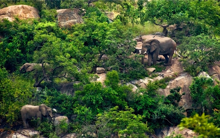 Bongani Mountain Lodge, South Africa #lgbt #africa #safari #elephants