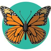 El Mariposa Monarca está en peligro de extinción