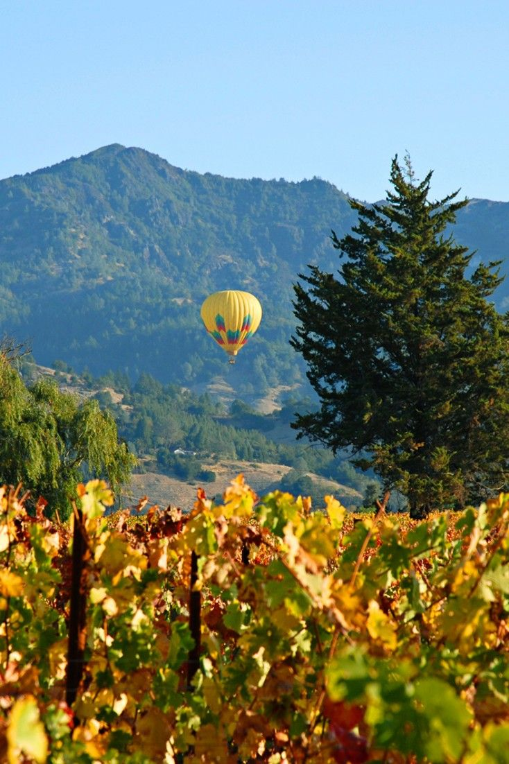 Napa Valley's myriad diversions are all within reach of this elegant B&B. #Jetsetter