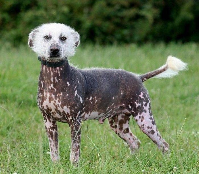 Top15: Bem mais de 15 Fotos de cachorros diferentes de várias raças e em várias situações diferentes.