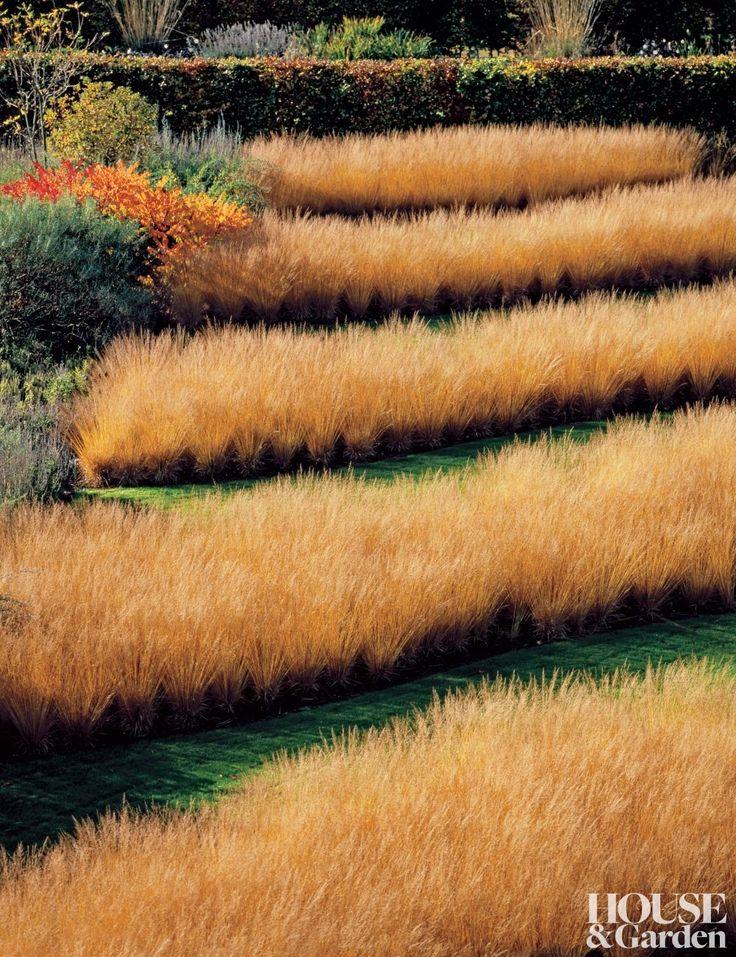 22 best gorgeous grasses images on pinterest for Natural grasses for landscaping