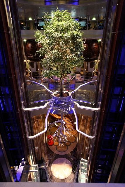 Ficus - Celebrity Reflection
