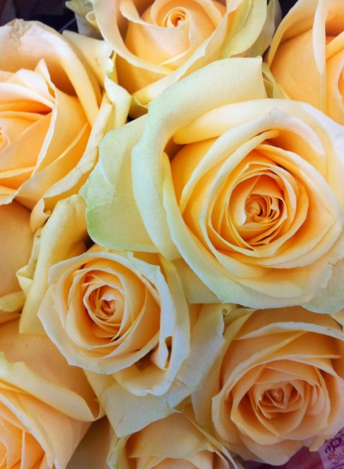 Perfect Peach Roses In the shop today https://www.facebook.com/funkyflorist
