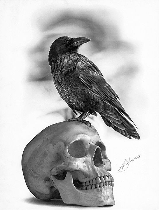The Raven and The Skull - Pencil Drawing by Julio Lucas on Behance