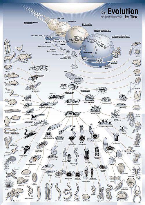 Die Evolution und die Artenvielfalt des Lebens